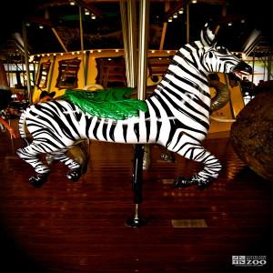 Plains Zebra - Carousel
