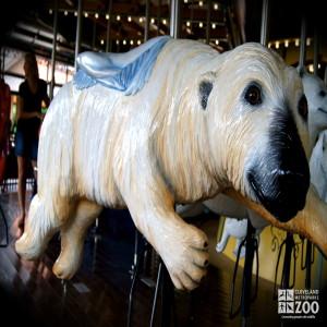Polar Bear - Carousel