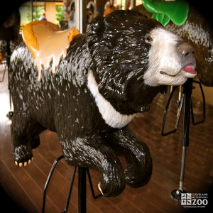 Sloth Bear - Carousel