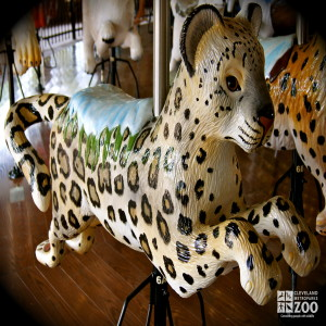 Snow Leopard - Carousel
