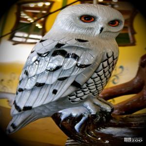 Snowy Owl - Carousel