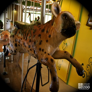 Spotted Hyena - Carousel