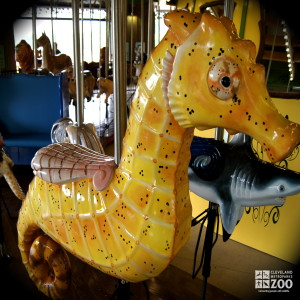 Spotted Sea Horse - Carousel