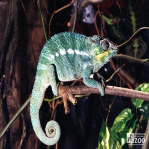 Chameleon on Branch 2