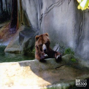 Bear, Grizzly5