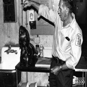 Pale-Headed Saki With Keeper