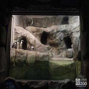 African Penguin Shores Exhibit