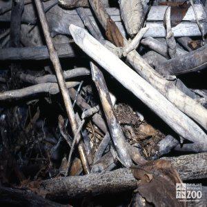 Beavers Den 2