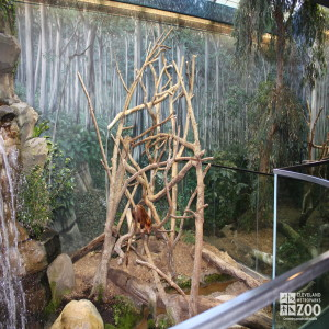 Gum Leaf Hideout, Tree Kangaroo Enclosure
