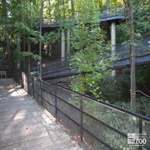 Deck Walk 1