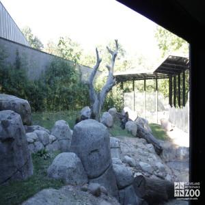 Gorilla Outdoor Enclosure 3
