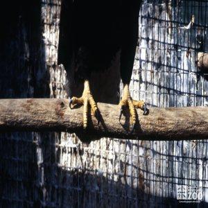 Eagle, Bald Up Close Of Talons
