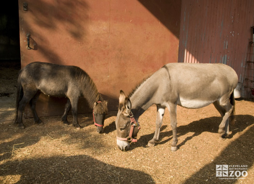 Donkeys, Domestic Eating