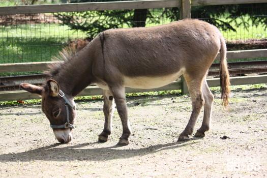Donkeys, Domestic Eating 2