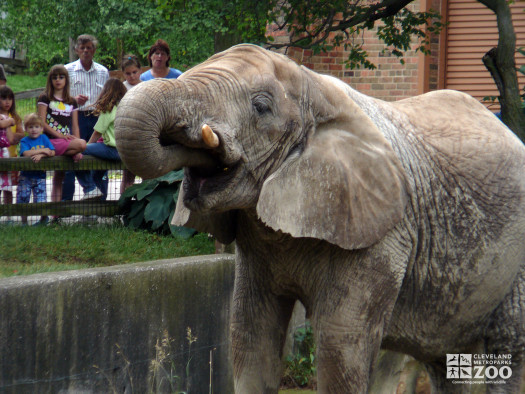 Elephant Munches at Old Pachyderm Building