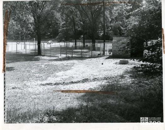 1948 - Deer Pen