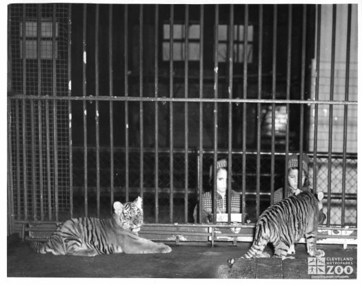 1948 - Tiger Cubs and Children