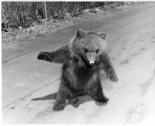 1957 - Kodiak Bear Cub