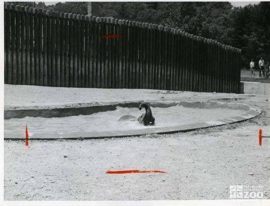1959 - Bathing African Elephant