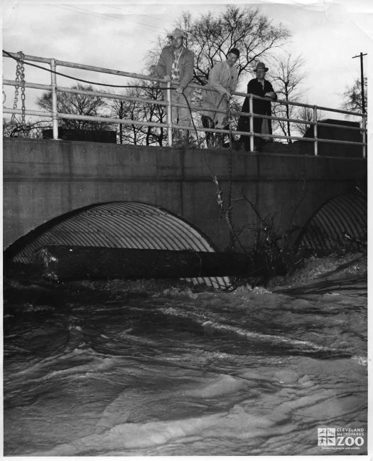 1959 - Tree Trunk at Flooded Culverts