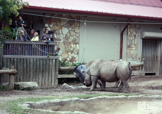 2012 - Rhinos at Creature Comforts Event