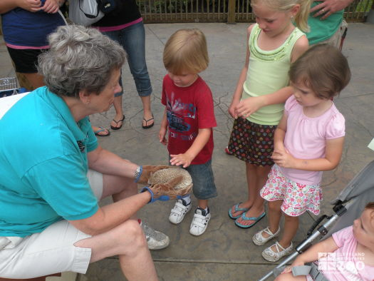 A Get Close Experience with an African Hedgehog