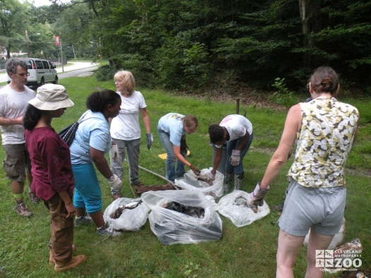 Zoo Crew during Big Creek Cleanup