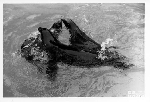 1982 - Sea Lions