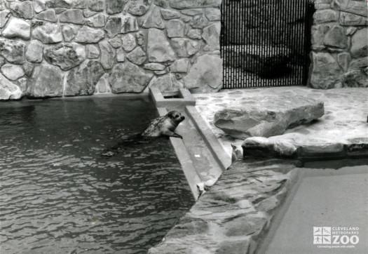 1982 - Seal, Harbor 2