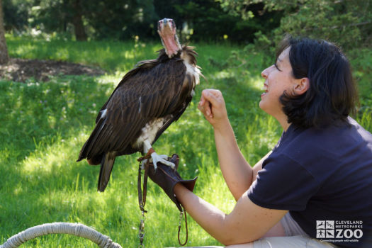 Family Discoveries - Vulture