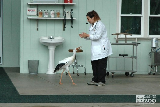 Professor Wylde's Dr. Zoolittle Show with the Stork