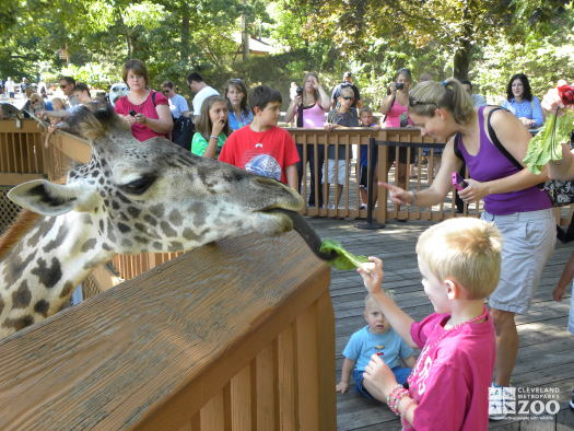 Children Feeding the Giraffes