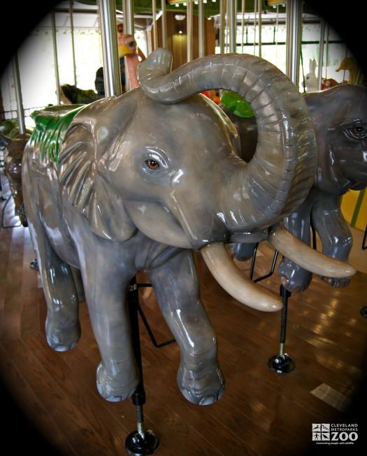 African Elephant - Carousel