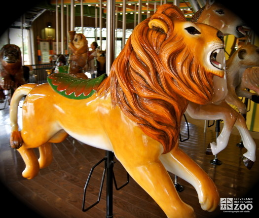 African Lion - Carousel