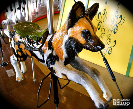 African Painted Dog - Carousel