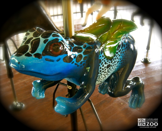 Blue Poison Dart Frog - Carousel