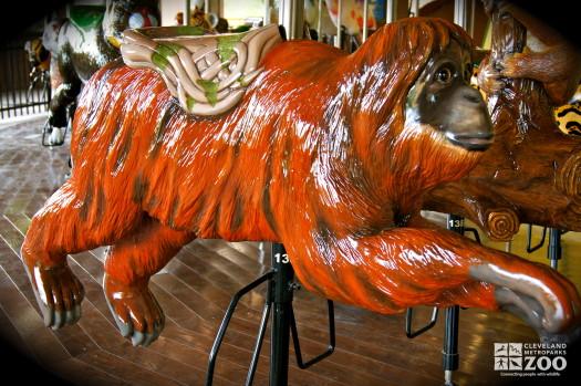 Bornean Orangutan - Carousel
