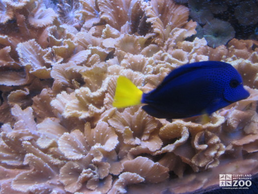 Cabbage Leather Coral and Fish