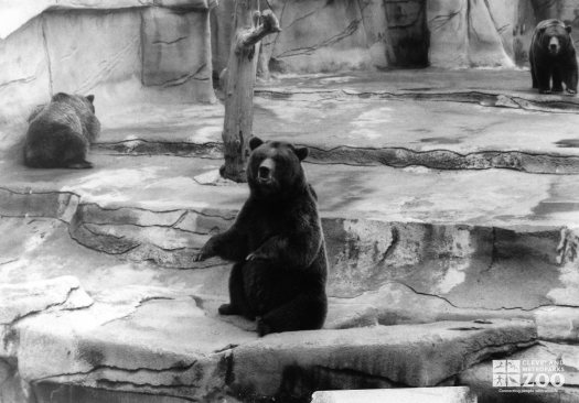 Bears, Grizzly6