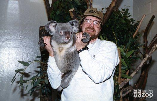 Koala, Queensland9