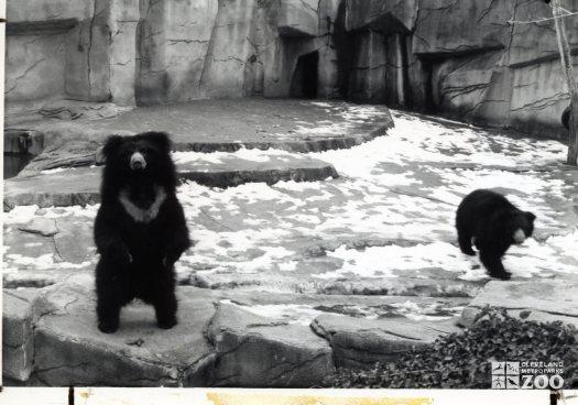 Sloth Bears Black and White 2 1983