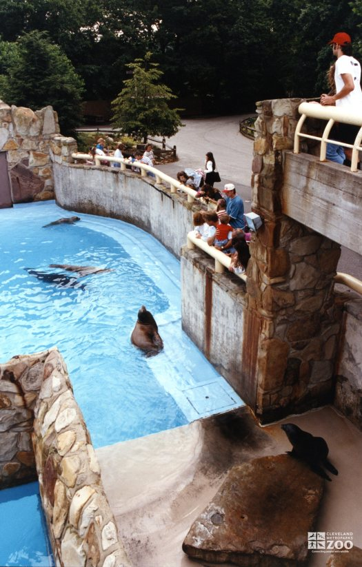 California Sea Lions At Seal & Sea Lion Exhibit