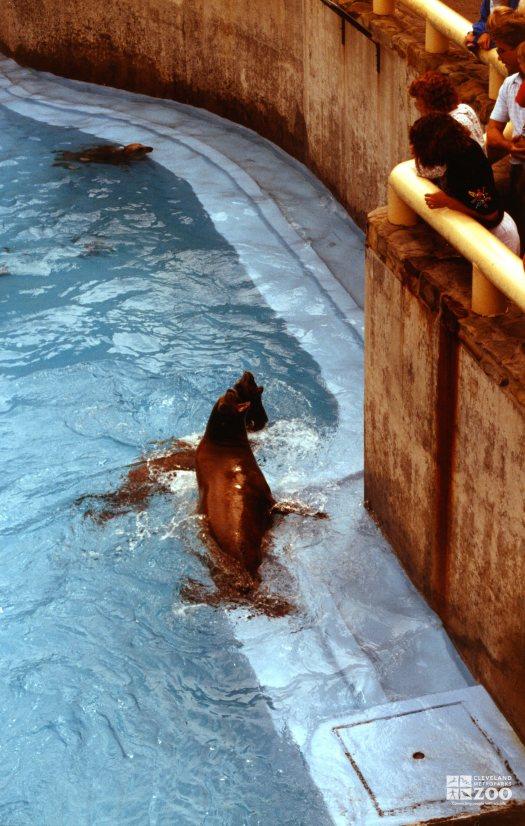California Sea Lion Getting Fish 3