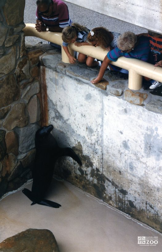 California Sea Lion Leaning On Wall