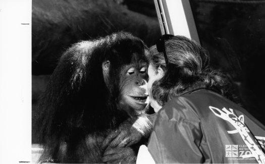 Orangutan Face-toFace
