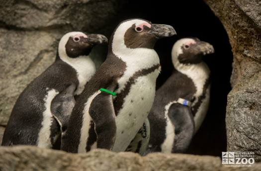 African Penguin Group
