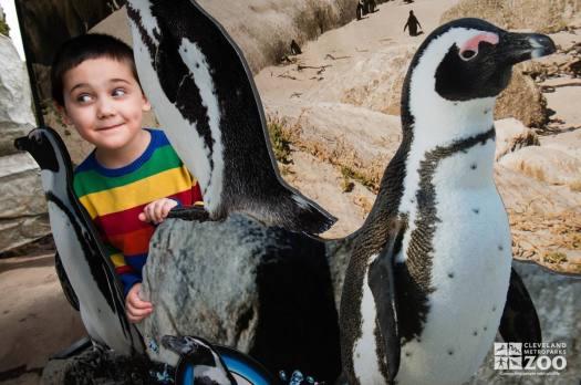 Penguin Shores Exhibit Visitor