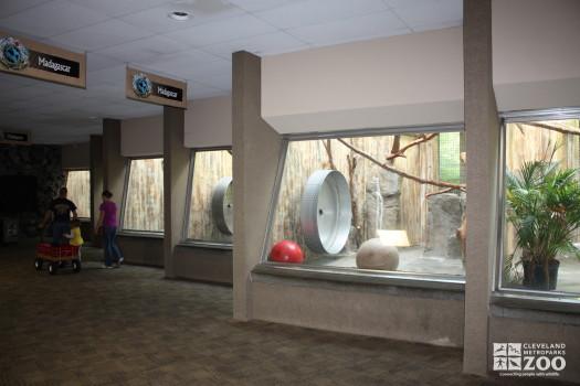 Madagascar Exhibits