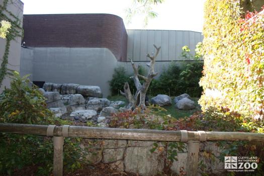 Gorilla Outdoor Enclosure 2