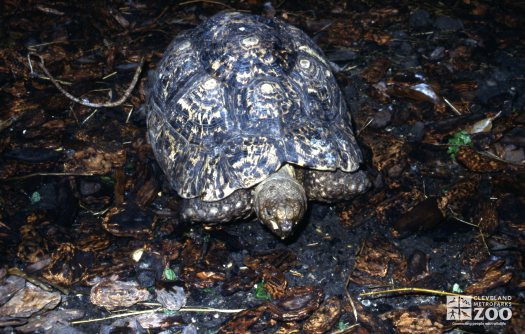 Tortoise, Leopard Up Close Of Face